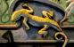 SalamanderSmall