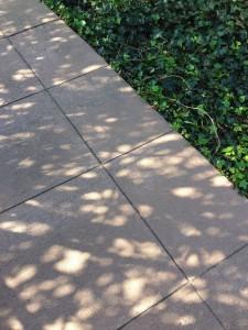 LeafShadows1